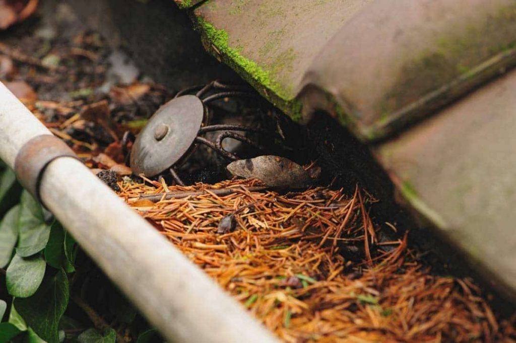 clogged roof guttering
